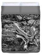 201702250-005k Cedar Stumps 2x3 Duvet Cover