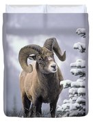 25084, Bighorn Sheep, Winter, Jasper Duvet Cover