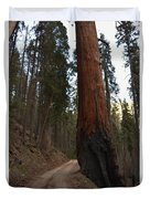 Giant Sequoia Trees Duvet Cover