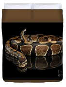 Ball Or Royal Python Snake On Isolated Black Background Duvet Cover