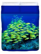 Bluestripe Snapper Duvet Cover