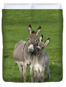 Donkey Mother And Young Duvet Cover