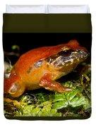 Rosy Ground Frog Duvet Cover