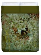 Squat Anemone Shrimp Duvet Cover