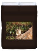 3- Squirrel Duvet Cover