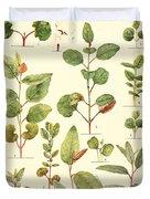 Vintage Botanical Illustration Duvet Cover