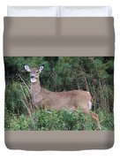 White Tailed Deer Calverton New York Duvet Cover