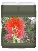 Australia - Red Callistemon Flower Duvet Cover