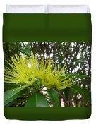Australia - Pollinating A Green Leionema Flower Duvet Cover
