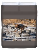 Duck And Goose Hunting Stock Photo Image Duvet Cover