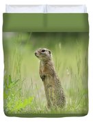 A European Ground Squirrel Standing In A Meadow In Spring Duvet Cover