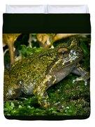 Mehu�n Green Frog Duvet Cover