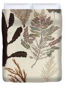 Aquatic Animals - Seafood - Algae - Seaplants - Coral Duvet Cover