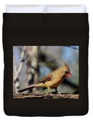 Female Cardinal Duvet Cover