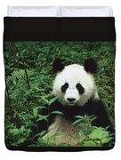 Giant Panda Ailuropoda Melanoleuca Duvet Cover by Cyril Ruoso