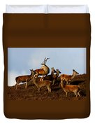 Red Deer In The Highlands Duvet Cover