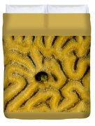 A Blenny In Brain Coral Duvet Cover