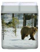 A Brown Bear Ursus Arctos Walks Duvet Cover