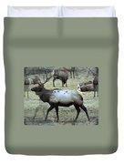 A Bull Elk  Duvet Cover