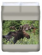A Bull Moose Among Tall Bushes Duvet Cover