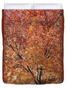 A Claret Ash Tree In Its Autumn Colors Duvet Cover