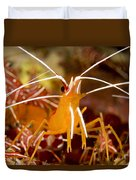 A Cleaner Shrimp Perches On An Exposed Duvet Cover
