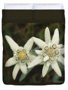 A Close View Of An Edelweiss Flower Duvet Cover
