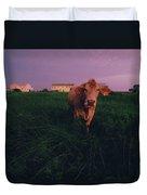A Cow Walks Near Beachhouses Duvet Cover