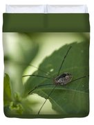 A Daddy Longlegs Spider Sits On A Leaf Duvet Cover