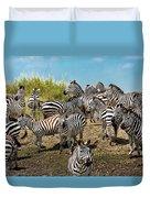 A Dazzle Of Zebras Duvet Cover