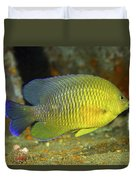 A Dusky Damselfish Offshore From Panama Duvet Cover