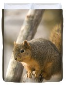 A Fox Squirrel Sciurus Niger Perches Duvet Cover