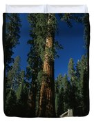 A Giant Sequoia Tree Towers Duvet Cover