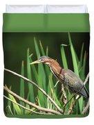 A Green Heron Stalks Prey Duvet Cover