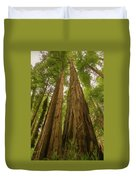A Group Giant Redwood Trees In Muir Woods,california. Reaching F Duvet Cover