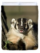 A Hand-raised Badger At The Home Duvet Cover