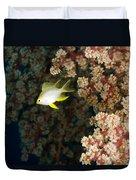 A Juvenile Golden Damsel Fish Shelters Duvet Cover