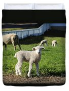 A Longwool Lamb Duvet Cover