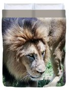 A Male Lion, Panthera Leo, King Of Beasts Duvet Cover