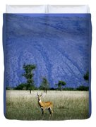 A Male Ugandan Kob Stands His Ground Duvet Cover