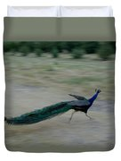 A Peacock On A Hog Farm In Kansas Duvet Cover