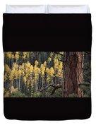 A Ponderosa Pine Tree Among Aspen Trees Duvet Cover