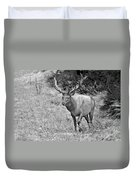 A Rack Of Antlers - Roosevelt Elk - Olympic National Park Wa Duvet Cover