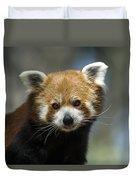 A Red Panda Ailurus Fulgens At Zoo Duvet Cover
