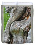 A Remarkable Tree - Duncan Western Red Cedar Olympic National Park Wa Duvet Cover by Christine Till