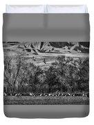 A Sedge Of Sandhill Cranes Duvet Cover