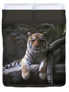 A Siberian Tiger At Omahas Henry Doorly Duvet Cover