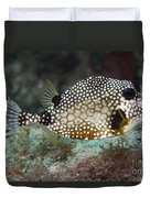 A Spotted Trunkfish, Key Largo, Florida Duvet Cover