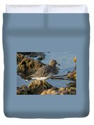 A Surfbird At The Tidepools Duvet Cover
