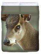 A Western Tufted Deer Elaphodus Duvet Cover